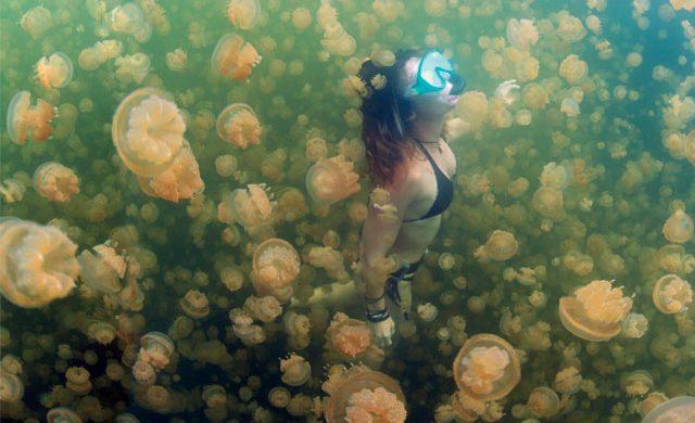 海底花园 | 帛琉 Palau